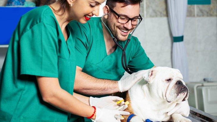 犬が苦手な『動物病院』の5つの特徴