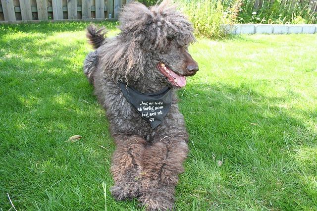トリマーとは?犬をきれいにするペット専門の美容師