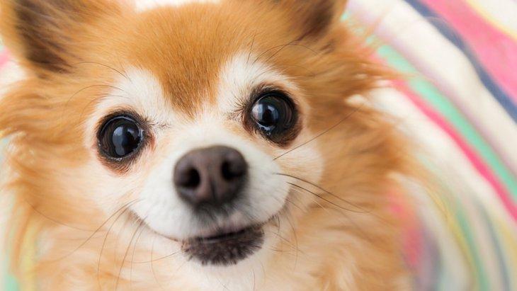 犬が喜ぶフレーズ4選