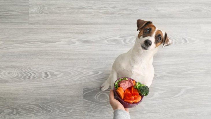 犬は水菜を食べても大丈夫?与え方と2つの注意点