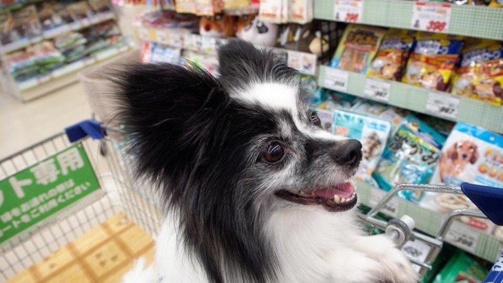 犬をコンビニなどに連れていく時の注意点と対策