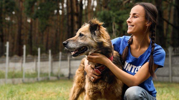 ググるたびにシェルターの保護犬にフードが寄付されるブラウザアプリ