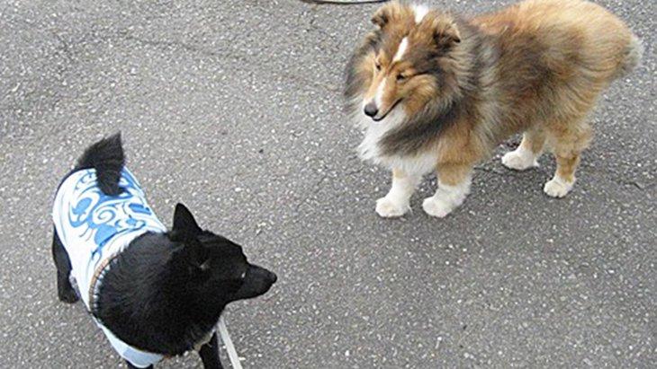 犬同士が初対面でも確実に仲良くできる方法
