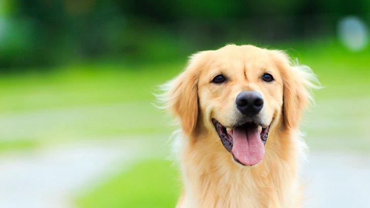 小型犬、中型犬、大型犬を区別する定義とは