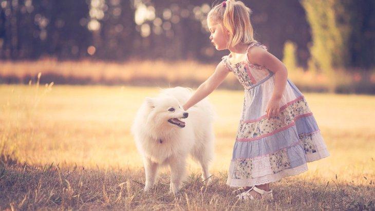 犬が『ンー』と鳴く気持ちとは?4つの心理と正しいスキンシップの取り方