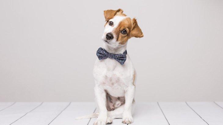 犬の聴力は人の何倍?比較と注意点