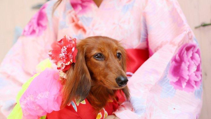 犬の飼い主が絶対に注意すべき『夏のイベント』3選