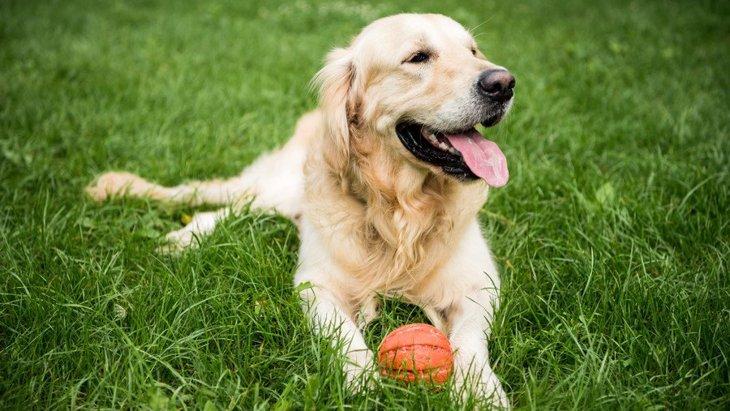 犬が『嫌いなおもちゃ』によくする仕草や行動3選