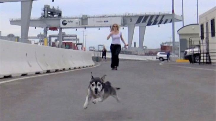 運動能力抜群な小型犬の保護では、すごいスイッチの切り替えを目撃!