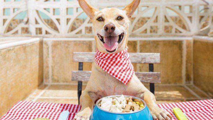 犬のプロテインの効果や注意点、おすすめのサプリメントとは