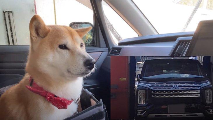 初めての洗車にドキドキする柴犬ちゃんが激カワ!