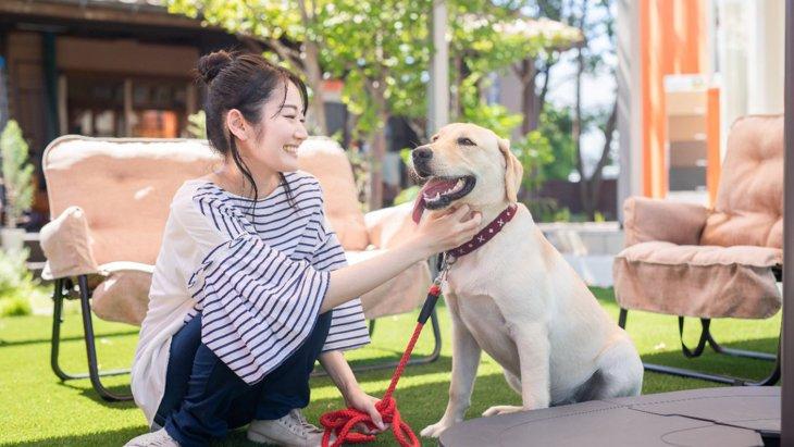 犬は人を軽蔑することがある?3つのサインと仲良くなる方法