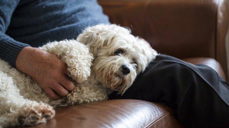 犬が老化している時に見せる行動4選!何に気を付けて過ごせばいいの?
