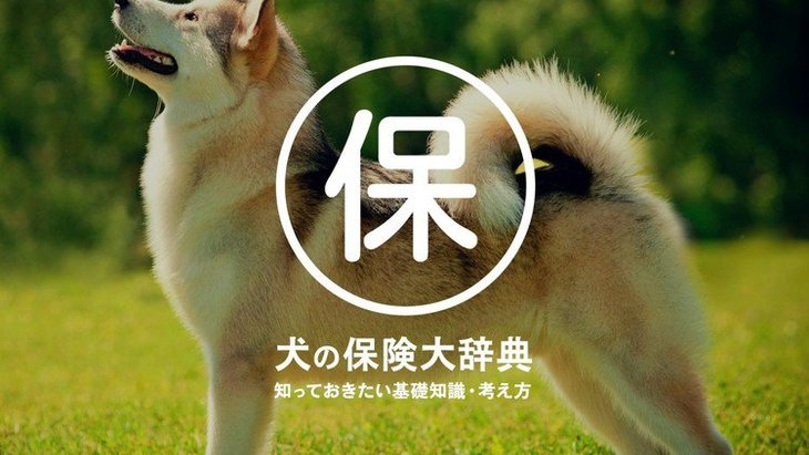 犬の保険大辞典!知っておきたい基礎知識