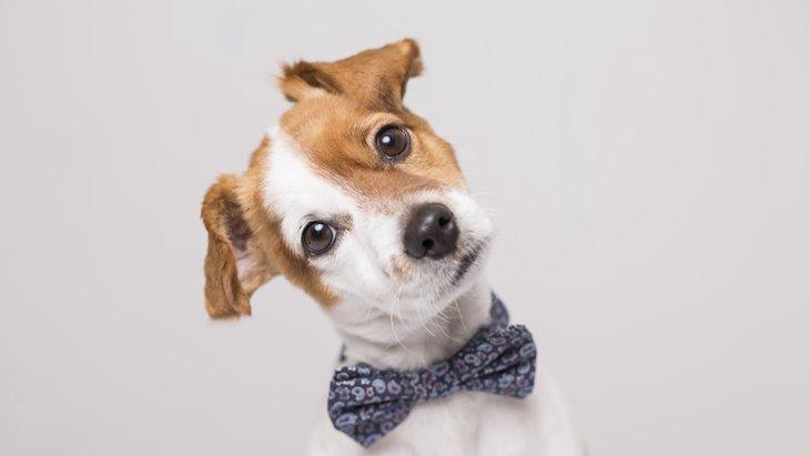 犬がイタズラをする心理とは?悪いことだと分かってやっている?