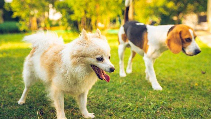 犬同士でも『いじめ』はあるのか?