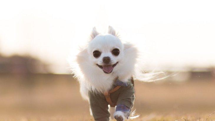 犬が飼い主についてくる心理4つ
