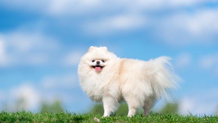 犬はどうして毛が生えてるの?どんな役割がある?