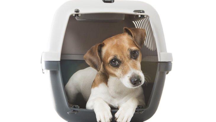 犬にケージでリラックスしてもらうための6つのポイント