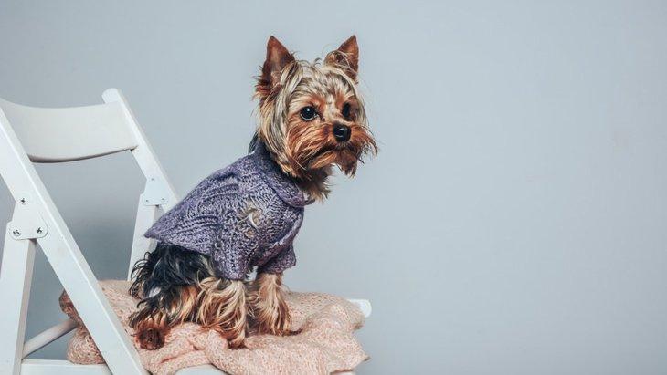 犬がソファーや椅子から飛び降りるのは危険?リスクを避ける4つの対策
