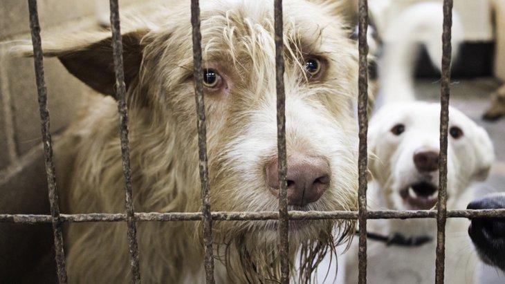 多頭飼育崩壊はなぜ起きてしまうの?原因と対策