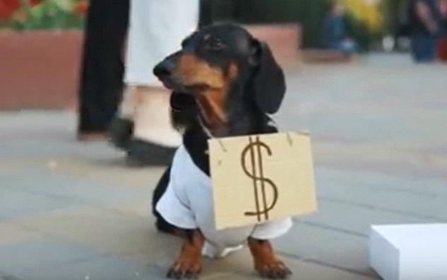 ずる賢い!寄付をがっぽがっぽ集めるダックスさんの名演技