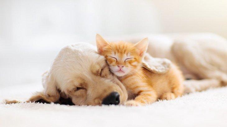 犬が『夢に出てくる』時の心理状態6選!状況別の意味を解説