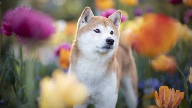 賢い犬によくみられる4つの共通点