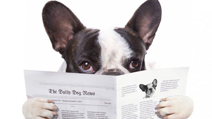 新感覚ニュースアプリ「News Suite」でわんちゃんホンポの記事を配信開始!