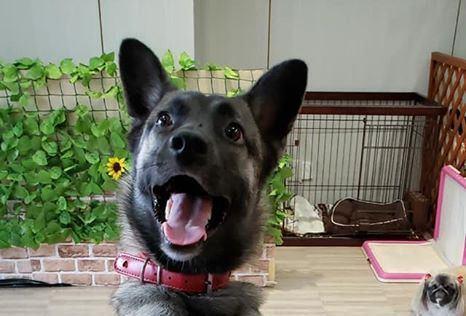 【里親詐欺】里親にセンター持ち込みされた犬
