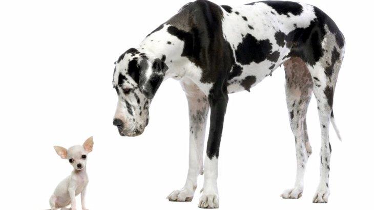 特定危険犬種について ~飼い主...