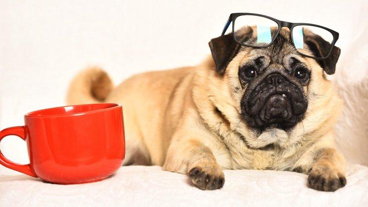 犬にルイボスティーを飲ませても大丈夫?
