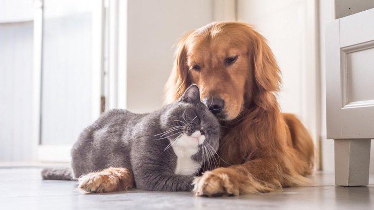 犬と一緒に飼うべきではない『ペット』5選