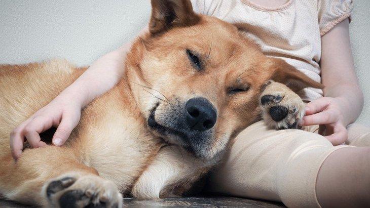 犬が『飼い主をエスコート』している時に見せる仕草や行動5選