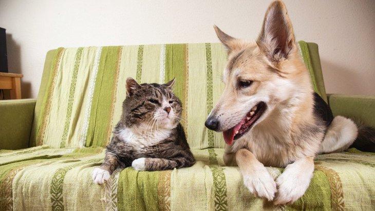 犬と猫が仲良く暮らすための鍵はフェロモンにあった【研究結果】