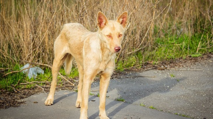 犬が野生動物や環境を脅かしているという世界的な問題