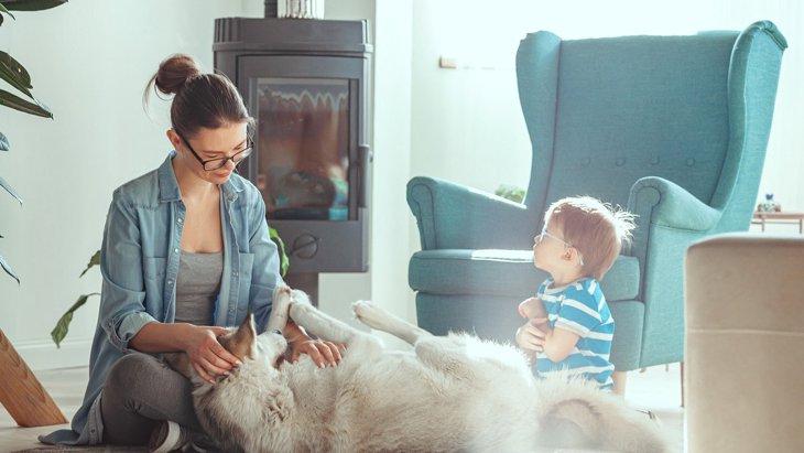 『しつけが難しい犬』5選!こんな特徴がある場合は根気が必要かも?