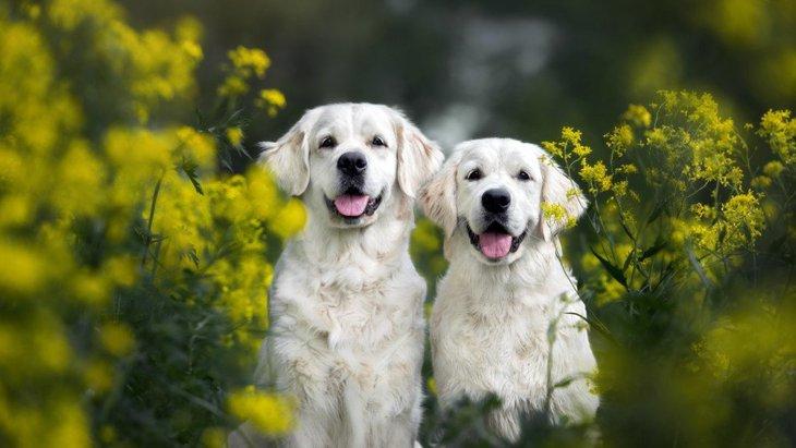 犬を幸せにする『5つの方法』