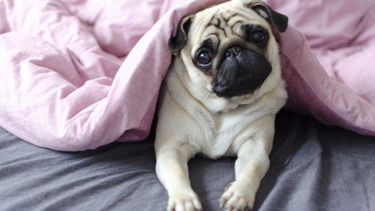 犬は寝る位置によって一緒に寝ている人への抱いている感情が異なる?