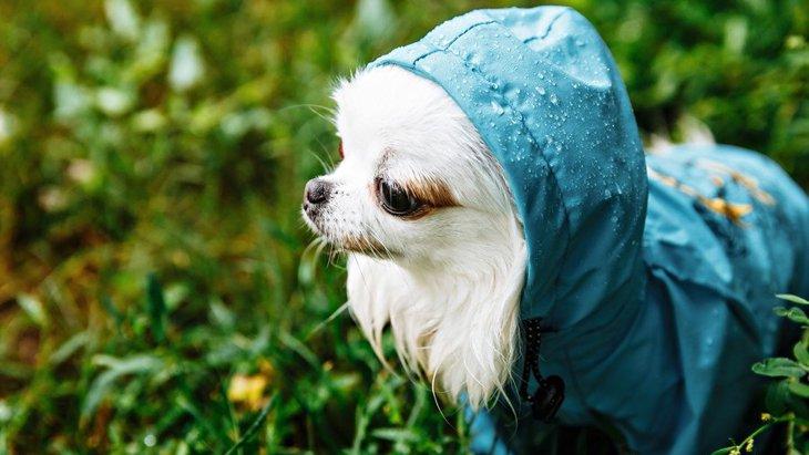 なんかゴメン…犬に洋服を着せると動かなくなる心理