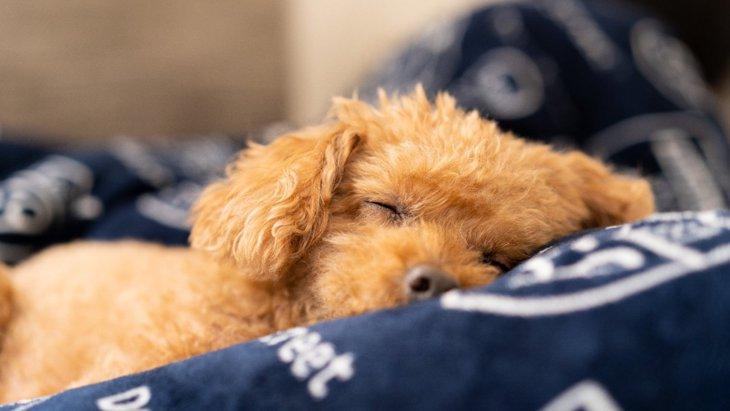 犬が寝ている時に必ず意識すべき『5つのこと』