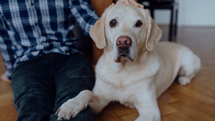 子犬はいつ頃からどのように指さし行動を理解する?【研究結果】