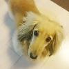 はいチーズ!可愛い愛犬を一手間かけた撮影と最新の加工で更に可愛くしよう♪