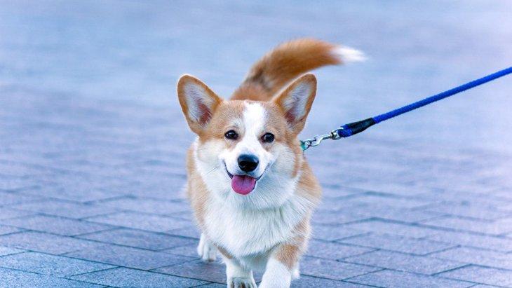犬が『自信に満ち溢れている時』にする仕草や態度5選