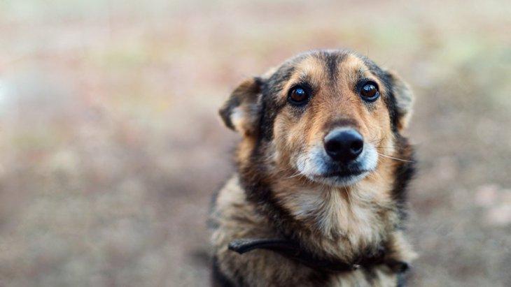 犬が『飼い主に叱られている時に見せる仕草や態度』7選