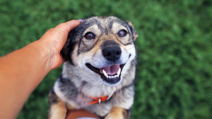 犬は人間の顔に対して愛着を感じているだろうか?【研究結果】