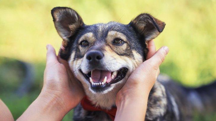 犬の飼い主がついついやってしまう『甘やかし行為』5選