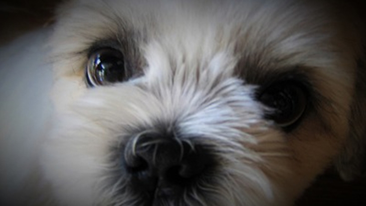 被災地熊本でのペットの現状と現地で活動を続ける動物愛護団体