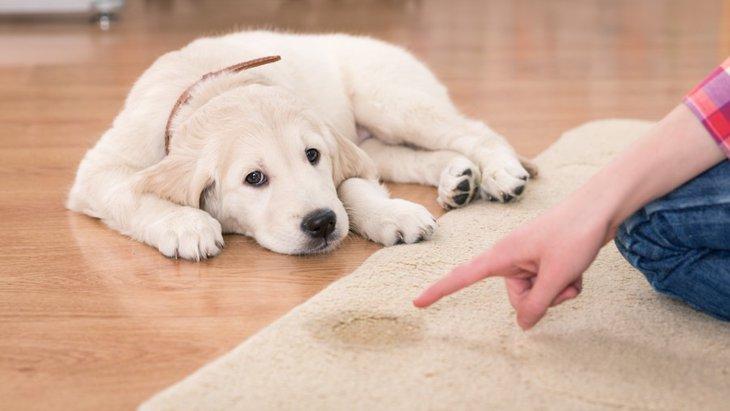 犬がビビリションをする原因と対処法