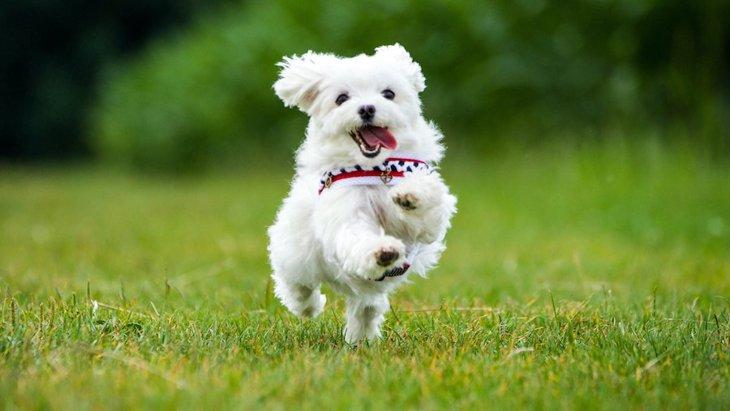 犬が『突進』する時の心理4つ